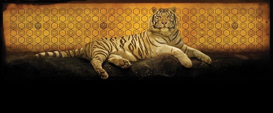 tigre_hp